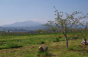 0503 林檎の木、飯縄山
